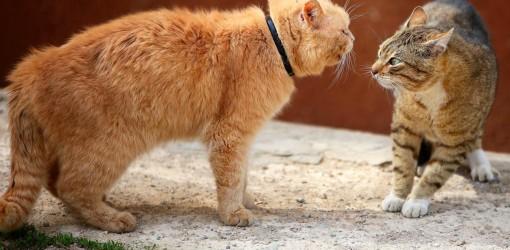 نزاع گربهها و نظام حقوقی شیمیایی