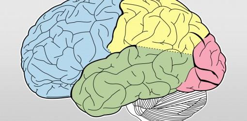 مغزی که خودش را تربیت میکند